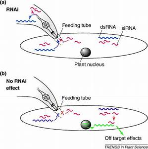 RNA interference and plant parasitic nematodes: Trends in ...