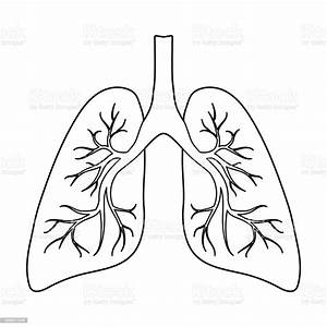 Lungs Icon In Outline Style Isolated On White Background