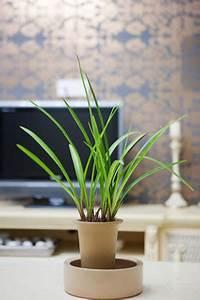 Luftwurzeln Bei Orchideen : orchideen umtopfen anleitung und hinweise zu luftwurzeln ~ Frokenaadalensverden.com Haus und Dekorationen