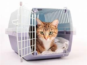 Was Brauchen Katzen : die richtige transportbox f r katzen tipps ~ Lizthompson.info Haus und Dekorationen