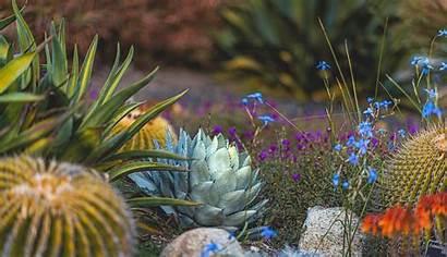 Desktop Garden Desert Happy Naina Wallpapers Plant