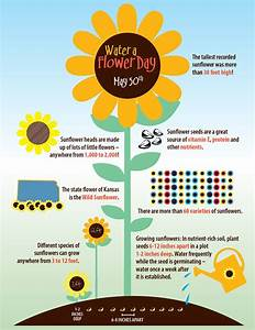Water A Flower Day  Sunflower Infographic