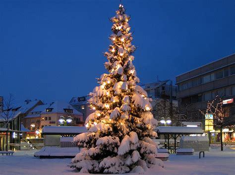 weihnachtsbaum f 252 r weilimdorf gesucht stuttgart weilimdorf