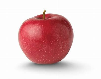 Apple Sweet Varieties Rome Tart York Association