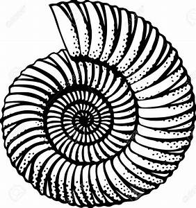 b&w Sea shell | oceanic tattoo elements | Pinterest | Occult