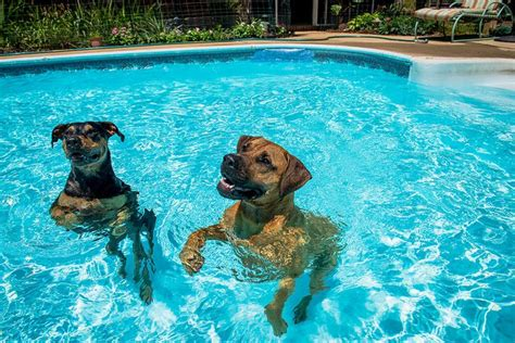 Can Dogs Swim In Them?