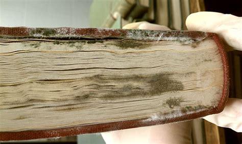 remove mold   library    books
