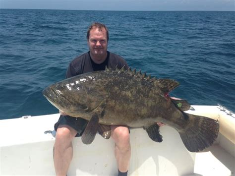 grouper goliath keeper charters another englewood tripadvisor rate
