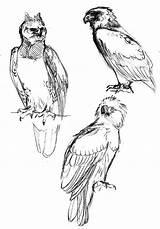 Harpy Eagle Coloring Coloringsun sketch template