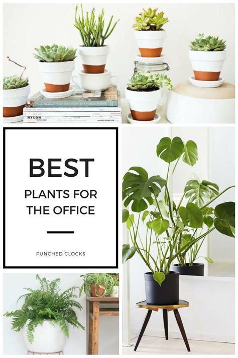 best office desk plants download best office plants slucasdesigns com