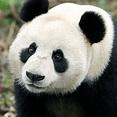 Animals & Zones - River Safari | Wildlife Reserves Singapore