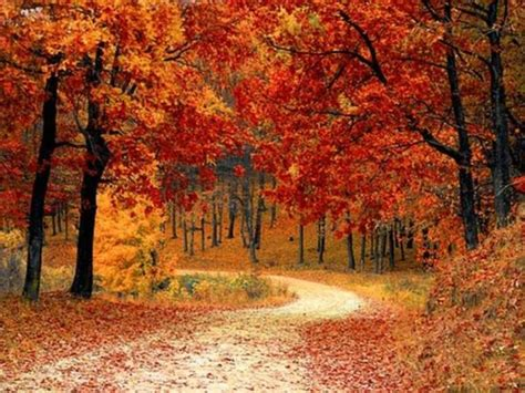 fall colors in virginia fall foliage 2017 best time to see leaves change in