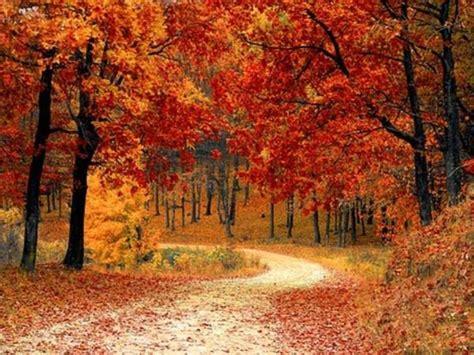 fall foliage    time   leaves change