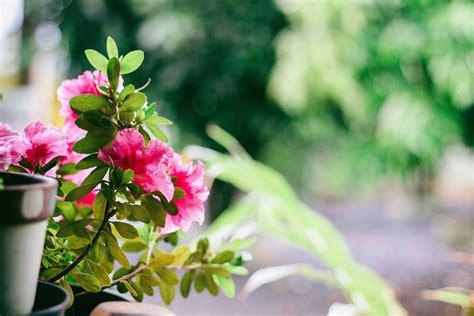 terrazzo fiorito tutto l anno come avere un balcone fiorito tutto l anno green mag