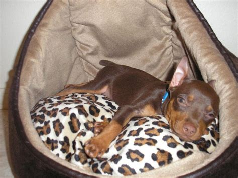 166 best images about chocolate minpins on pinterest