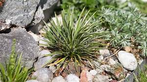 Die Schönsten Steingärten : pflanzen fur steingarten ~ Bigdaddyawards.com Haus und Dekorationen