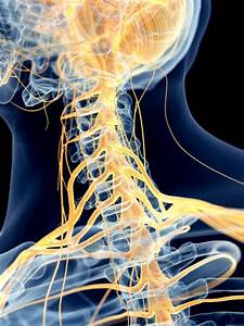 Trapped Nerves In The Neck