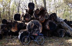 вырубка деревьев на собственном участке