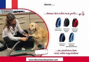 Aspirateur Poil De Chien : brosse pour chien adaptable aspirateur la boutique des pirates ~ Medecine-chirurgie-esthetiques.com Avis de Voitures