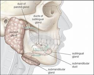 Symptoms Of Salivary Gland Cancer