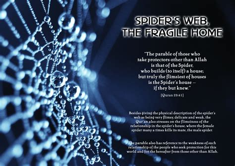 the quran and the modern science picture quran modern science spider s web navedz
