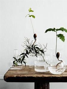 Anthurie Im Wasser : 15 diy indoor water garden ideas home design and interior ~ Yasmunasinghe.com Haus und Dekorationen