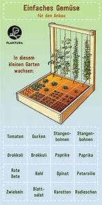Gemüse Anbauen Plan : hochbeet bepflanzen pflanzplan mischkultur gr nd ngung ~ Watch28wear.com Haus und Dekorationen