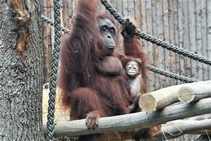 öffnungszeiten Zoo Rostock : sonnenschein surya erkundet die welt rostock heute ~ Eleganceandgraceweddings.com Haus und Dekorationen