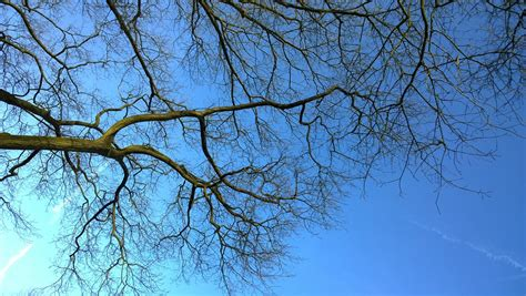 sky blue  photo  pixabay