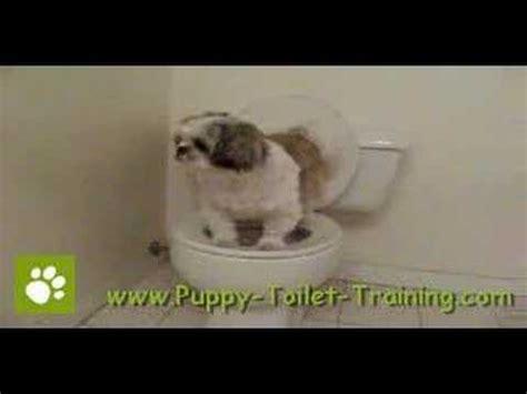 puppy using toilet