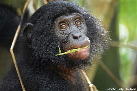 wealth  biodiversity  congo basin african wildlife