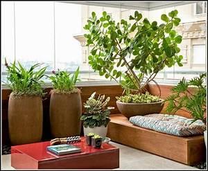 Sichtschutz Mit Pflanzen : sichtschutz mit pflanzen balkon balkon house und dekor ~ Michelbontemps.com Haus und Dekorationen