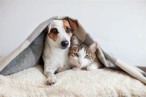 3 ลำดับ สัตว์เลี้ยงยอดนิยม ที่คนหลงรักและนิยมเลี้ยงมาก ...