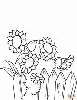 Coloring Fence Sunflowers Sunflower Near Pages Printable Flowers Drawing Flower Supercoloring sketch template
