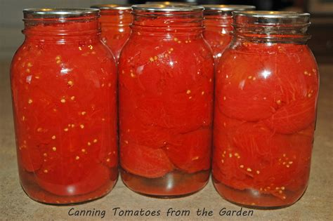 canned tomatoes canning tomatoes from the garden saving cent by cent