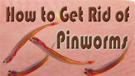 how do u get rid of worms 6 easy natural home remedies to cure pinworms yabibo