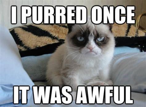 Best Of Grumpy Cat Meme - purred once grumpy cat meme