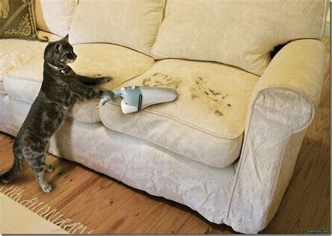 chat qui pisse sur le canape images en vrac 62