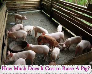 how much does it cost to clean a wedding dress how much does it cost to raise a pig