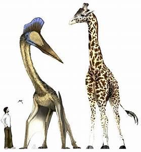 Quetzalcoatlus Facts, Etymology, Behavior and Adaptation  Quetzalcoatlus