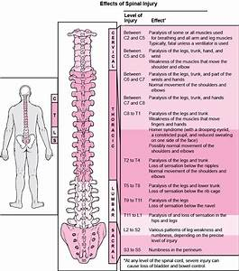 Injuries Of The Spinal Cord And Vertebrae