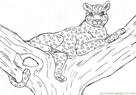 Cheetah Kleurplaat by Leopard Coloring Page Free Cheetah Coloring Pages