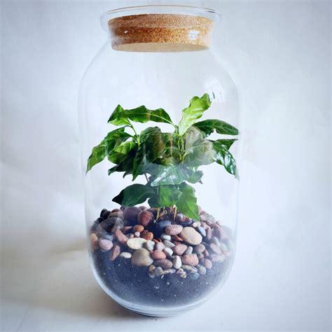 Rīta kafija (41cm x 23cm) - Ekosistēmas - Veikals ...