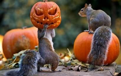 Halloween 4k Desktop Squirrels Pumpkin Wallpapers Squirrel