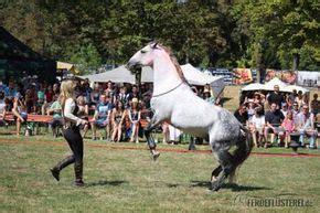 Körperband Pferd Kaufen