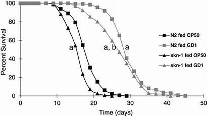 Resistance Stress Span Fed Caenorhabditis Respiratory Bacteria