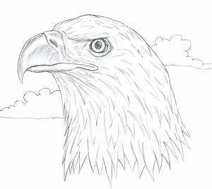hawk muscle diagram engine diagram and wiring diagram With bald eagle diagram