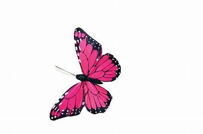 Butterfly Pink Clip Psd Animation Butterflies Morpho