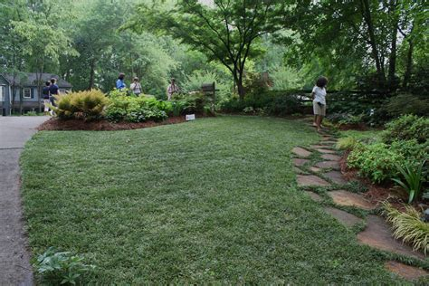 Mondo Grass Lawn 2 « Walter Reeves
