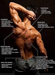 Back Training Diagram